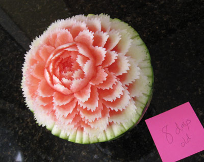 Melon Carving How Long Will Your Melon Carvings Last