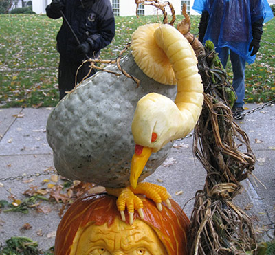 Gourd vulture at the White House