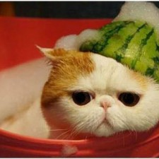 cat wearing a watermelon hat