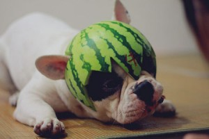 dog wearing a watermelon hat