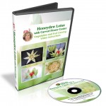 The Honeydew Lotus video tenth set of lessons in the 101 Course for Beginners