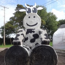 Bessie the hay bale cow