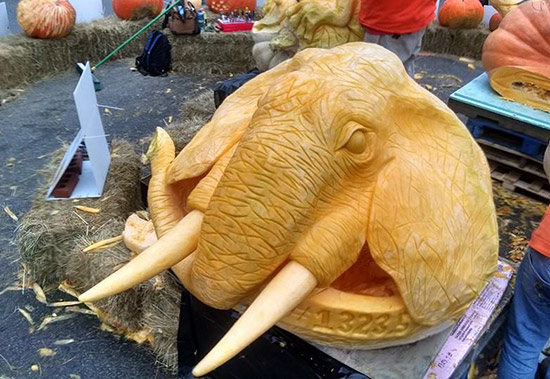 giant pumpkin carvings include this wonderful elephant