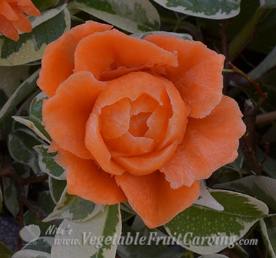 carved carrot rose