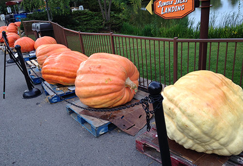 Big Boy Pumpkins at the Masters 3D pumpkin carving competition
