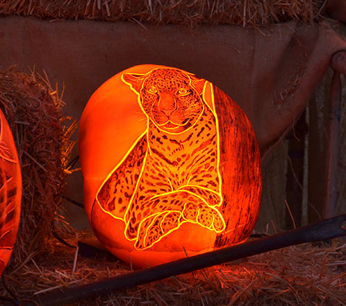 0266_tiger-pumpkin-2015