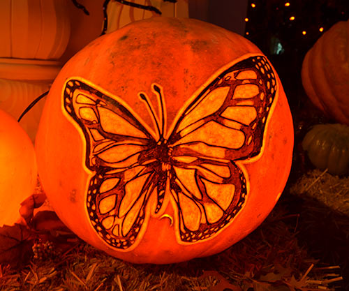 0304_butterfly-pumpkin-2015