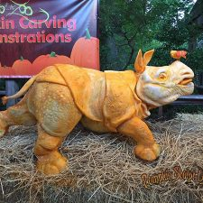 Rhino carved from a giant pumpkin by Z=Andy Gertler and Sue Beatrice. Isn't it fantastic!