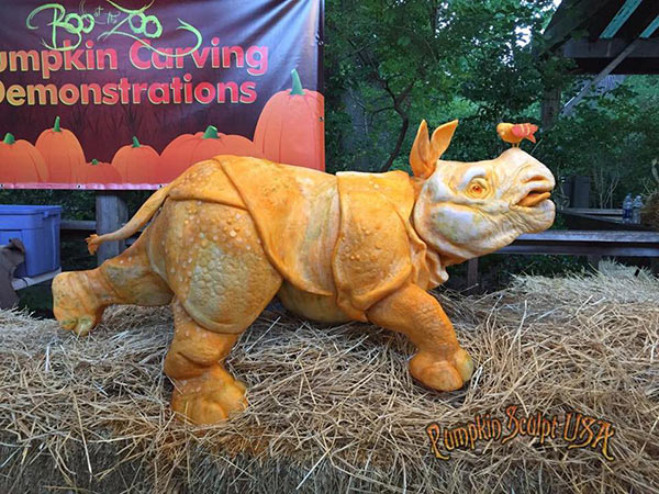 Rhino pumpkin sculpture by Andy Gertler and Sue Beatrice