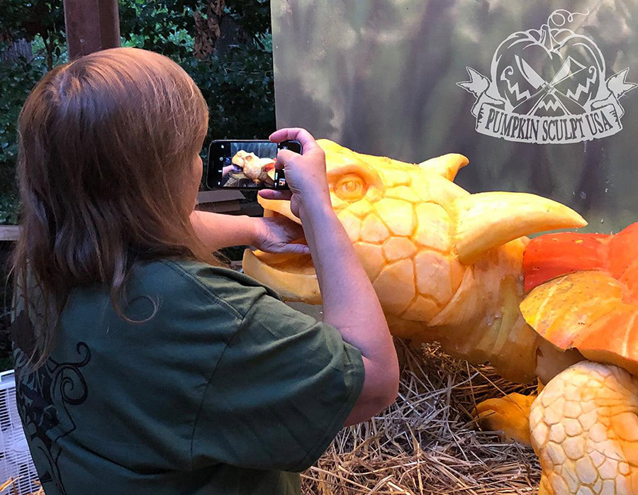 Meiolania brevicollis turtle pumpkin carving gives scale