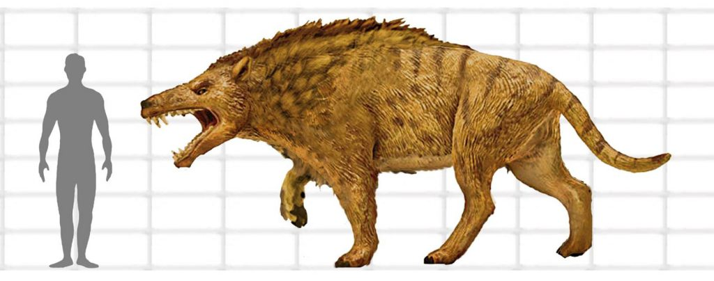 andrewsarchus and man to provide scale.